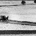 Amish Country Lancaster Pennsylvania Bw by Susan Candelario