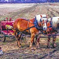 Amish Farming Team by Tommy Anderson