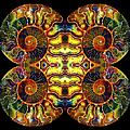 Ammonite Mandela - 044.1 by Paul W Faust - Impressions of Light