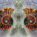 Ammonite Triptych Panel  by Paul W Faust - Impressions of Light