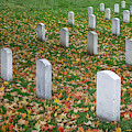 Among The Fallen  by Harriet Feagin