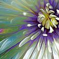 Amoreena Jaye by Cindy Greenstein