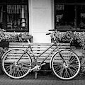 Amsterdam Wheels by Georgia Fowler