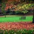 An Autumn Bench At Clyne Gardens by Leighton Collins