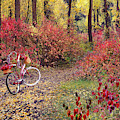 An Autumn Bike Trek by Leland D Howard