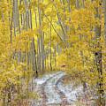 An Autumn Path by Leland D Howard