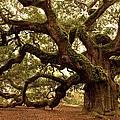 Ancient Angel Oak Near Charleston by Pgiam