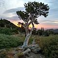 Ancient Tree by David Andersen