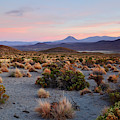 Andean Dry Puna At Sunset Isluga National Park Chile by James Brunker