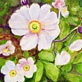 Anemones Birthday Card by Dai Wynn