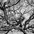 Angel Oak Black And White by Dan Sproul