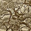 Angel Oak Drama In Vintage Sepia by Carol Groenen