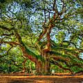 Angel Oak Morning Shadows 2 Johns Island Landscape Charleston South Carolina Art by Reid Callaway