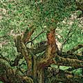 Angel Oak Panorama by Dan Sproul