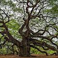 Angel Oak Tree Mysteries by Dale Powell