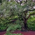 Angel Oak Tree by Rick Berk