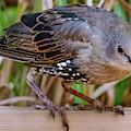 Angry Bird by Joel Friedman