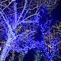 Christmas Light Tour 2017 by Carol Jackson