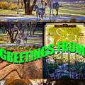 Animal Kingdom Custom Greeting Card by David Lee Thompson
