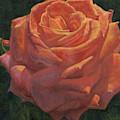 Anniversary Rose by Pamela Hastings