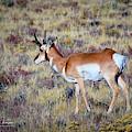 Antelope Buck by Jim Thompson