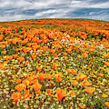 Antelope Valley Spring by Peter Tellone
