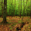 Appalachian Trail New Hampshire by Raymond Salani III
