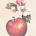 Apple And Blossoms by Carolyn Shores Wright