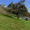 Apple Tree - Alpine Village by Phil Banks