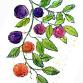 Apricots by Dan Nelson