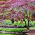 Arboretum Resting Place by Allen Nice-Webb