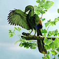Archaeopteryx Preening by Warren Photographic