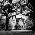 Ardoyne Plantation 2 by Bob Phillips