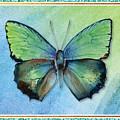 Arhopala Aurea Butterfly by Amy Kirkpatrick