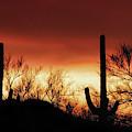 Arizona Monsoon Sunset 2019 by Elaine Malott
