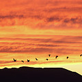 Arizona Sunset Of The Mule Mountains by Jean Clark