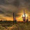 Arizona Sunset by Tim Hoffelmeyer