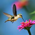 Art Of Hummingbird Flight by Christina Rollo