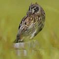Artistic Owl On Fence Post by Pamela Walton