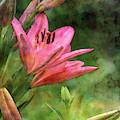 Asiatic Lilies 1755 Idp_2 by Steven Ward