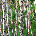 Aspen Abstract by Todd Klassy
