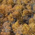 Aspen Autumn Leaves by Todd Klassy