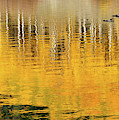 Aspen Reflections Abstract by Judi Dressler