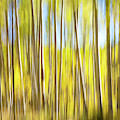 Aspen Trees Abstract by Judi Dressler