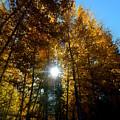Aspens Sunlight 2 by Brian Goodbar
