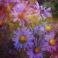 Aster Expression 5763 Idp_2 by Steven Ward