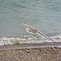 At Shores Edge by Kim Hojnacki