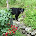 August Bear 5 by Amy E Fraser