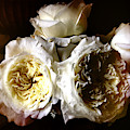 Austin Roses Notan by Elizabeth Quinn