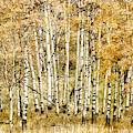 Autumn Aspen by Brad Allen Fine Art
